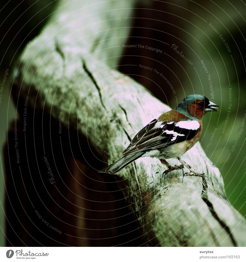 The Book Finch Colour photo Exterior shot Close-up Copy Space left Copy Space bottom Shadow Contrast Silhouette Central perspective Animal portrait Full-length