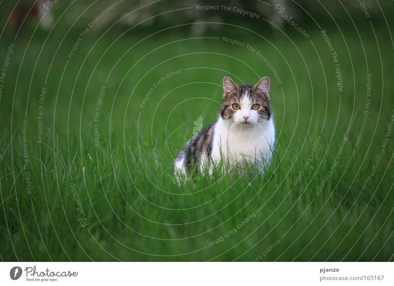 Nature Animal Meadow Grass Spring Garden Hair and hairstyles Cat Fear Sit Cool (slang) Animal face Threat Observe Catch Pelt