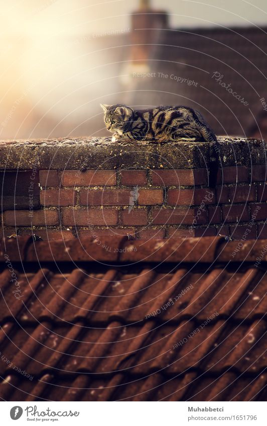cat Animal Pet Cat 1 Stone Brick Elegant Fantastic Warmth Brown Emotions Environment cats cute animals pets Colour photo Exterior shot Deserted Day