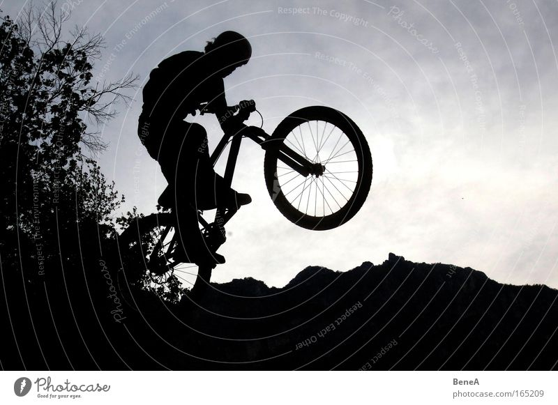 Tree Joy Black Mountain Sports Movement Jump Healthy Bicycle Leisure and hobbies Alps Driving Fitness Cycling Brave Sportsperson