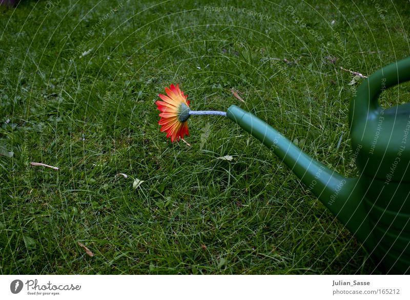 watering can Environment Nature Plant Elements Earth Spring Climate Climate change Garden Meadow Watering can Colour photo Exterior shot Experimental Deserted