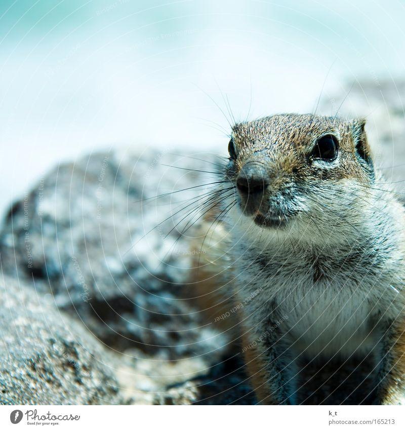 Nature Blue Animal Life Freedom Stone Small Animal face Observe Trust Wild Pelt Serene Curiosity Discover