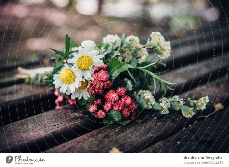 Flowers. Blossoms. Spring. Environment Nature Plant Rosemary Marguerite Daisy Bouquet Love Esthetic Exceptional Fragrance Happy Yellow Green Red White Emotions