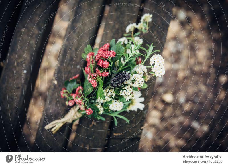 Nature Plant Beautiful Flower Love Emotions Healthy Happy Together Decoration Idyll Esthetic Uniqueness Joie de vivre (Vitality) Romance Friendliness