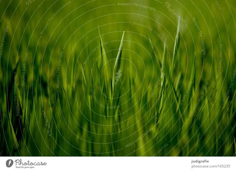 acre Colour photo Exterior shot Pattern Structures and shapes Deserted Day Food Environment Nature Landscape Plant Spring Summer Agricultural crop Field Growth