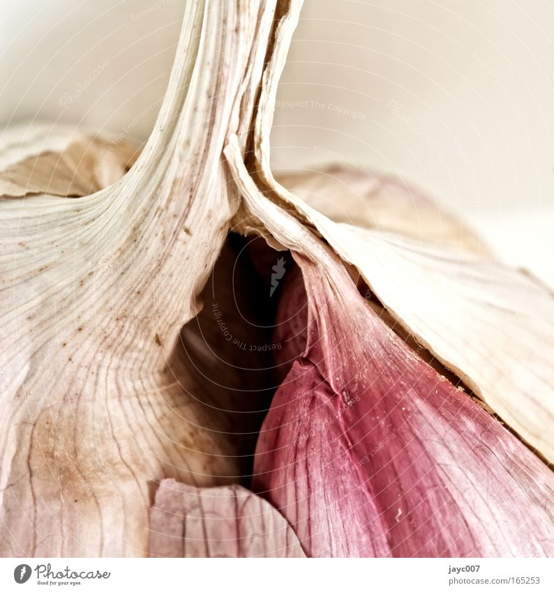 Garlic (detail) Colour photo Subdued colour Interior shot Studio shot Detail Macro (Extreme close-up) Structures and shapes Deserted Copy Space right