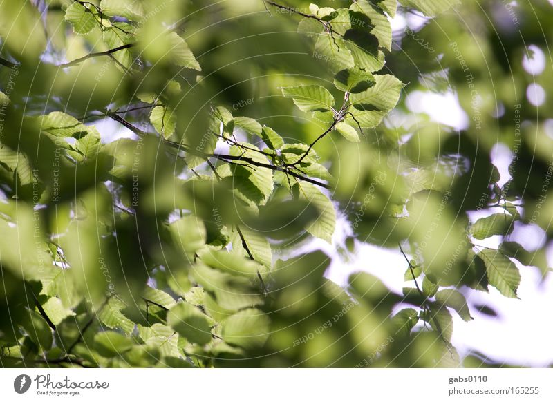 Nature Old Tree Green Plant Summer Leaf Life Spring Wood Landscape Contentment Power Environment Hope