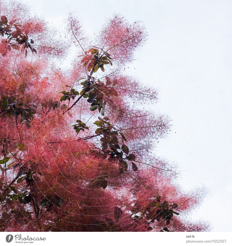 nwpc Nature Plant Tree Leaf Beautiful Red Fuzz Colour photo Exterior shot Deserted Day
