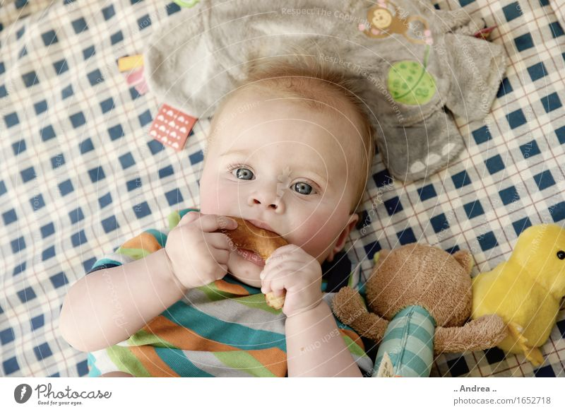 Pretzel tastes good Feminine Child Baby Toddler Girl Infancy 1 Human being 0 - 12 months Eating first meal Gnaw Looking into the camera blue eyes Lie