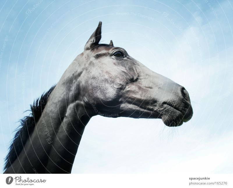 Sky Beautiful Animal Freedom Contentment Power Leisure and hobbies Elegant Glittering Esthetic Horse Romance Curiosity Warm-heartedness Animal face