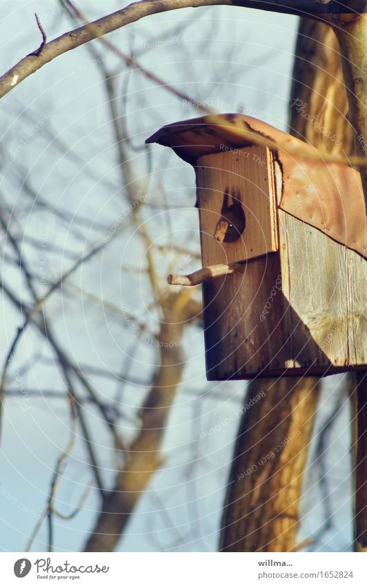 I'm a star, get me out of here! Spring Squirrel Wild animal Rodent strong box Nesting box Observe Nest-building squat Bleak Vantage point Colour photo