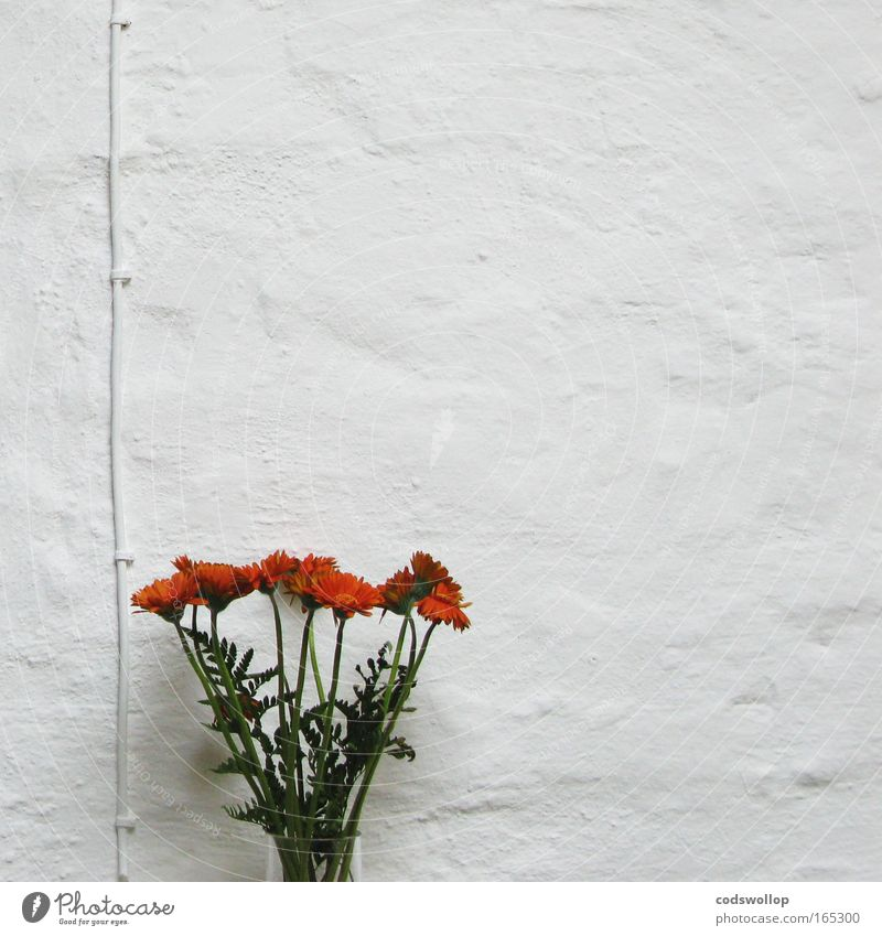 White Plant Flower Calm Death Wall (building) Style Sadness Wall (barrier) Room Flat (apartment) Interior design Natural Design Modern Energy industry