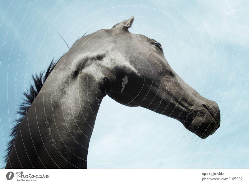 Beautiful Sky Animal Power Glittering Elegant Horse Esthetic Animal face Observe Wild Curiosity Pride Desire Arrogant Love of animals