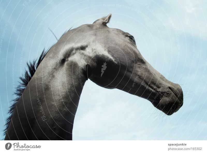 black beauty Colour photo Exterior shot Day Beautiful Sky Animal Horse Animal face 1 Observe Esthetic Elegant Glittering Curiosity Wild Bravery Power