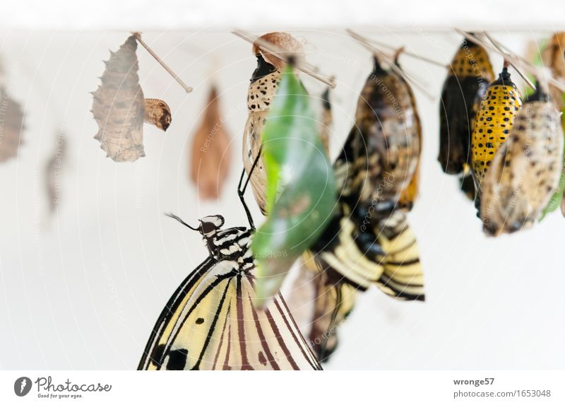 promotion of young talent Animal Wild animal Butterfly Insect 1 Group of animals Hang Exotic Small Near Beautiful Brown Multicoloured Yellow Gray Green White