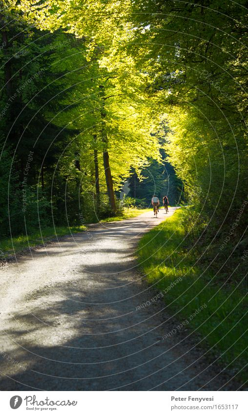 light tunnel Relaxation Cycling Cycling tour Bicycle Couple 2 Human being Environment Nature Landscape Forest Driving Beautiful Yellow Green Moody Dream Calm