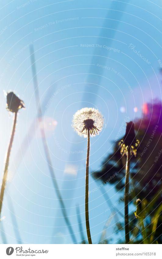 Nature Flower Plant Joy Meadow Grass Happy Park Landscape Contentment Dandelion Beautiful weather Spring fever Cloudless sky