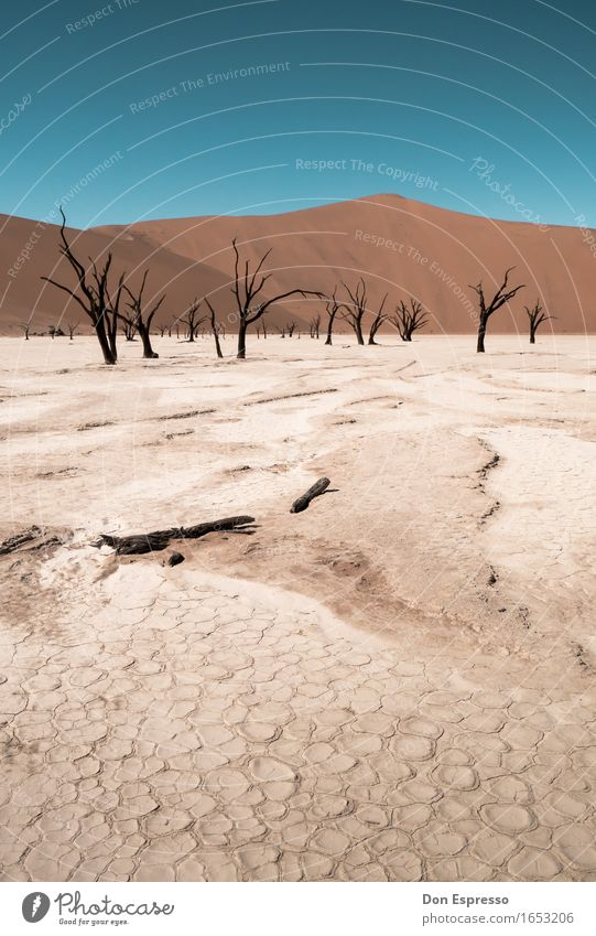 deadvlei Vacation & Travel Tourism Adventure Expedition Landscape Sand Cloudless sky Warmth Drought Desert Hot Gloomy Dry Thirst Loneliness Distress Nature