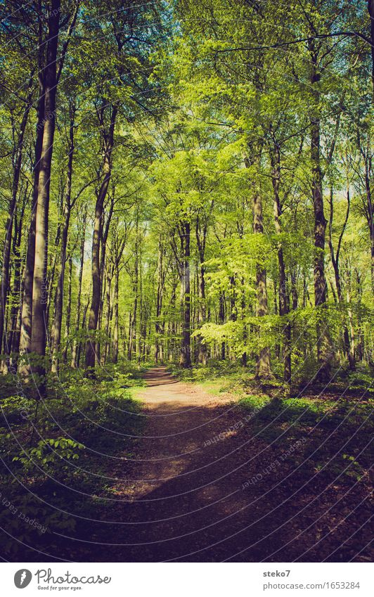 spring forest Spring Beautiful weather Tree Forest Lanes & trails Relaxation Hiking Fresh Green Nature Beech wood Deciduous forest Footpath Colour photo