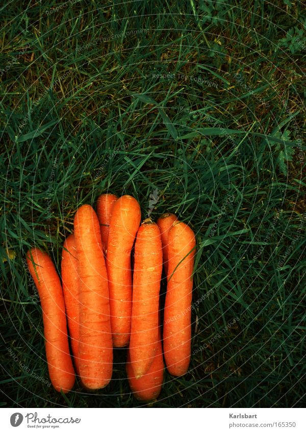 Nature Nutrition Grass Garden Healthy Food Environment Fresh Multiple Lie Vegetable Harvest Diet Organic produce Gardening Carrot