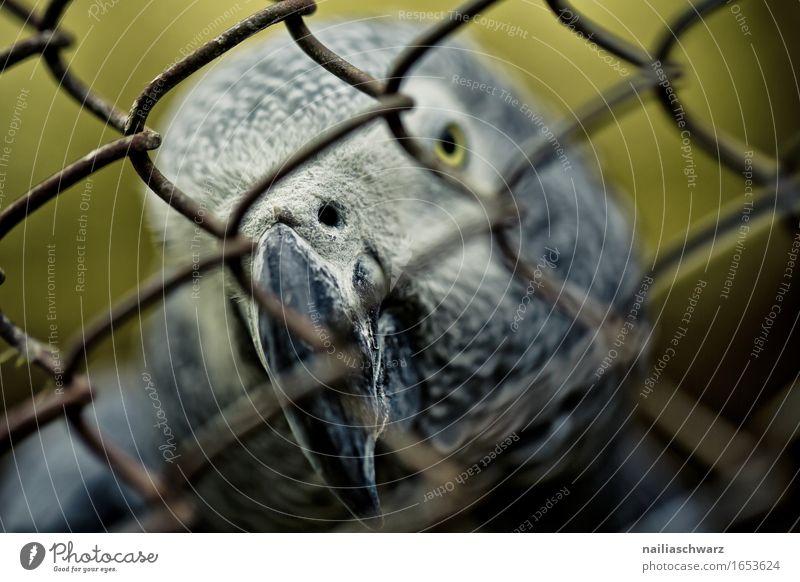 Nature Beautiful Animal Environment Yellow Natural Gray Bird Hope Curiosity Longing Wanderlust Catch Exotic Pet Animal face