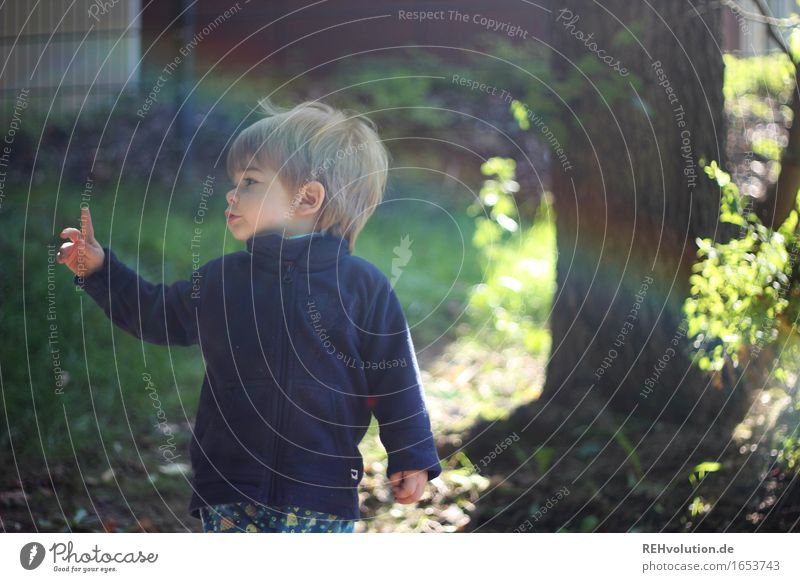 esteem Human being Masculine Child Toddler Boy (child) 1 1 - 3 years Environment Nature Sun Summer Tree Garden Park Meadow Observe Playing Small Natural Cute