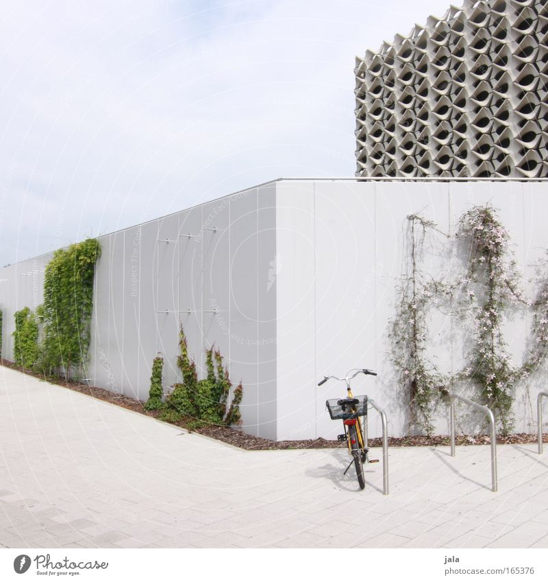 Sky White City Green Plant House (Residential Structure) Wall (building) Architecture Wall (barrier) Building Bright Bicycle Elegant Free Esthetic