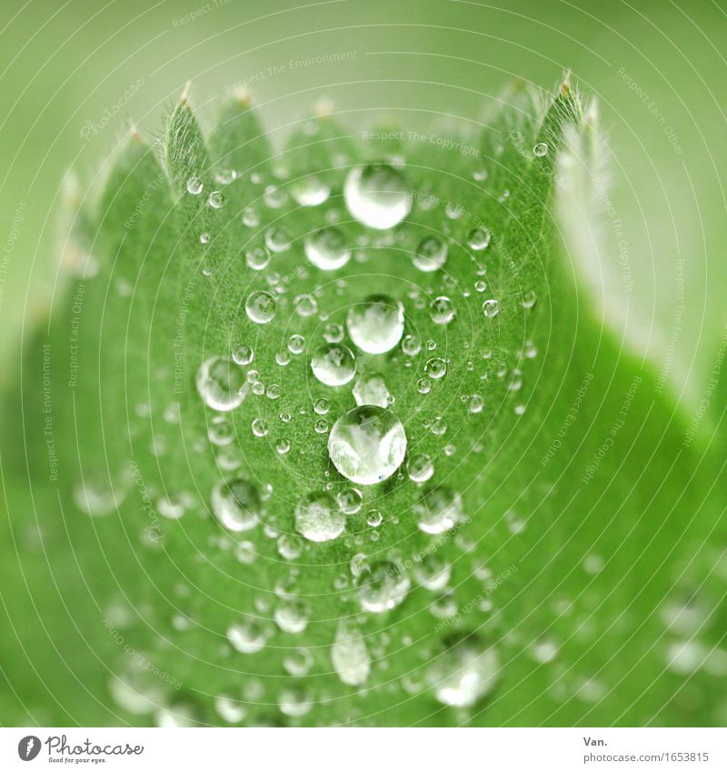 as fresh as a daisy Nature Plant Drops of water Autumn Rain Leaf Fresh Wet Green Colour photo Multicoloured Exterior shot Detail Macro (Extreme close-up)