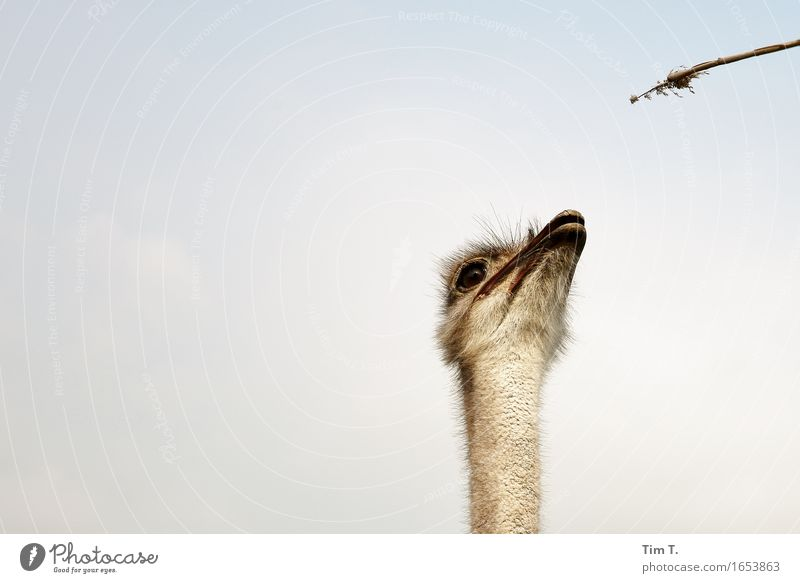 Animal Bird Wild animal Communicate Animal face Farm animal Ostrich
