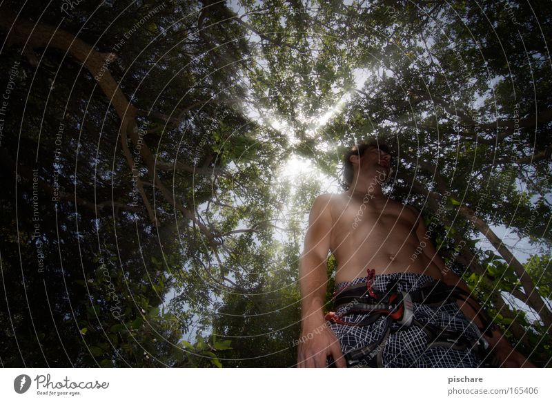 Collect yourself and then up into the light! Climbing Mountaineering Masculine Man Adults Body 1 Human being 30 - 45 years Nature Beautiful weather Tree Forest