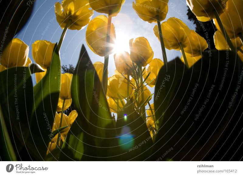 Nature Beautiful Sky Flower Green Blue Plant Joy Yellow Blossom Spring Park Fresh Hope Romance Natural