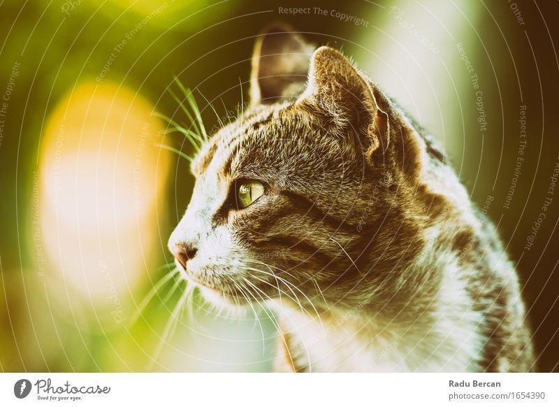 Domestic Cat Profile Portrait Nature Animal Pet Animal face 1 Observe Looking Friendliness Beautiful Retro Wild Love of animals Cat eyes Kitten Tabby cat