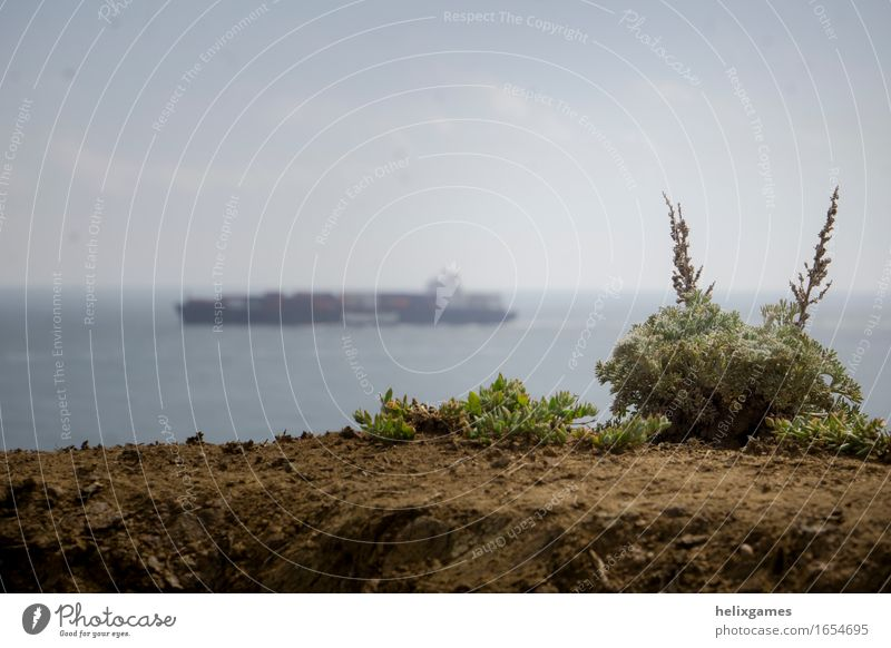 plant and a shipping vessel Cloudless sky Horizon Spring Plant Ocean Transport Navigation Container ship Crisis Culture Colour photo Deserted Copy Space left
