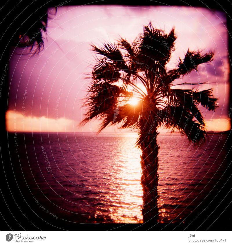 palm glow Colour photo Exterior shot Lomography Holga Twilight Sunbeam Sunrise Sunset Sky Horizon Beautiful weather Exotic Beach Contentment Spring fever