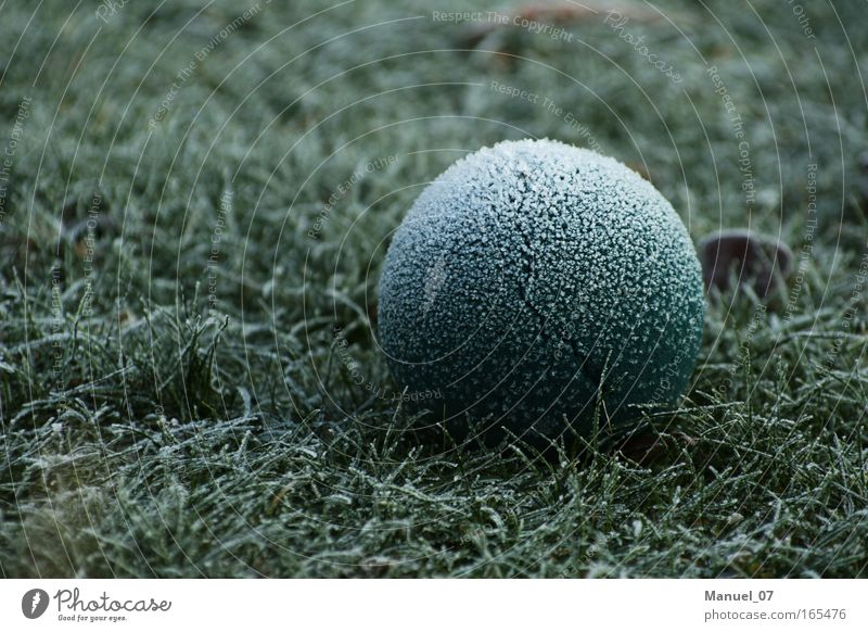 BALL ICE Colour photo Exterior shot Detail Deserted Copy Space left Morning Contrast Shallow depth of field Central perspective Environment Nature Plant Earth