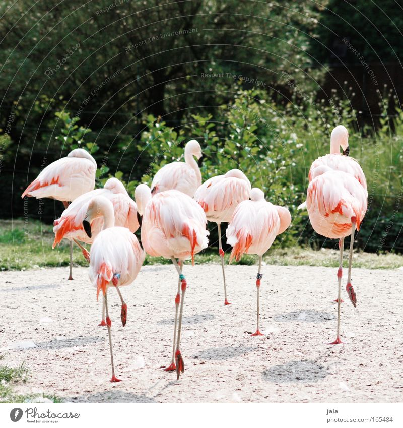break away Colour photo Exterior shot Deserted Day Central perspective Animal portrait Plant Bushes Bird Wing Zoo Group of animals Beautiful Pink Flamingo