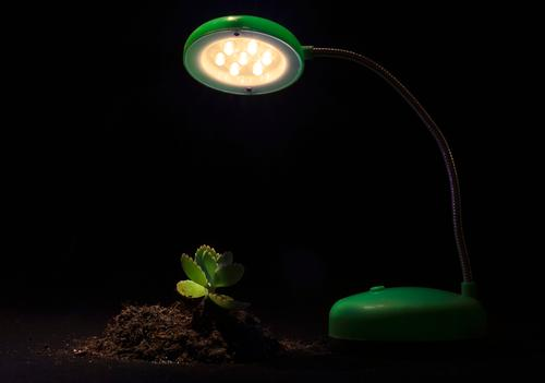 Young sprout and table lamp on a black background Lamp Table Technology Environment Nature Plant Earth Tree Flower Leaf Growth Friendliness Green Black
