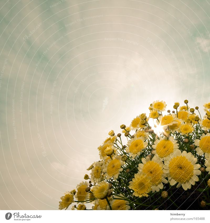 Sky Nature Beautiful Plant Sun Flower Clouds Yellow Blossom Bright Natural Esthetic Blossoming Fragrance Harmonious Section of image