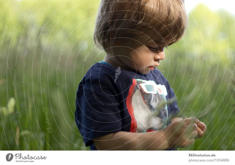 intensive observation Trip Freedom Human being Masculine Child Toddler Boy (child) 1 1 - 3 years Environment Nature Landscape Summer Grass Meadow Field Discover