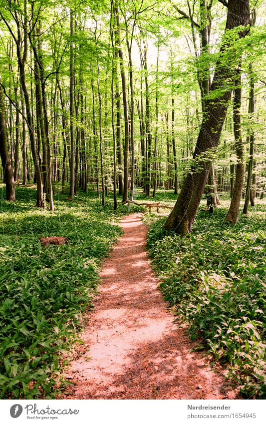 wild garlic Herbs and spices Trip Hiking Nature Landscape Plant Spring Summer Beautiful weather Tree Wild plant Forest Lanes & trails Growth Friendliness