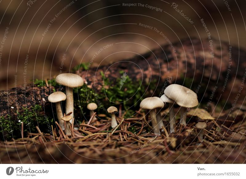 Autumn is here Environment Nature Plant Moss Mushroom Cone Fir needle Forest Growth Small Brown Colour photo Subdued colour Exterior shot Close-up Day
