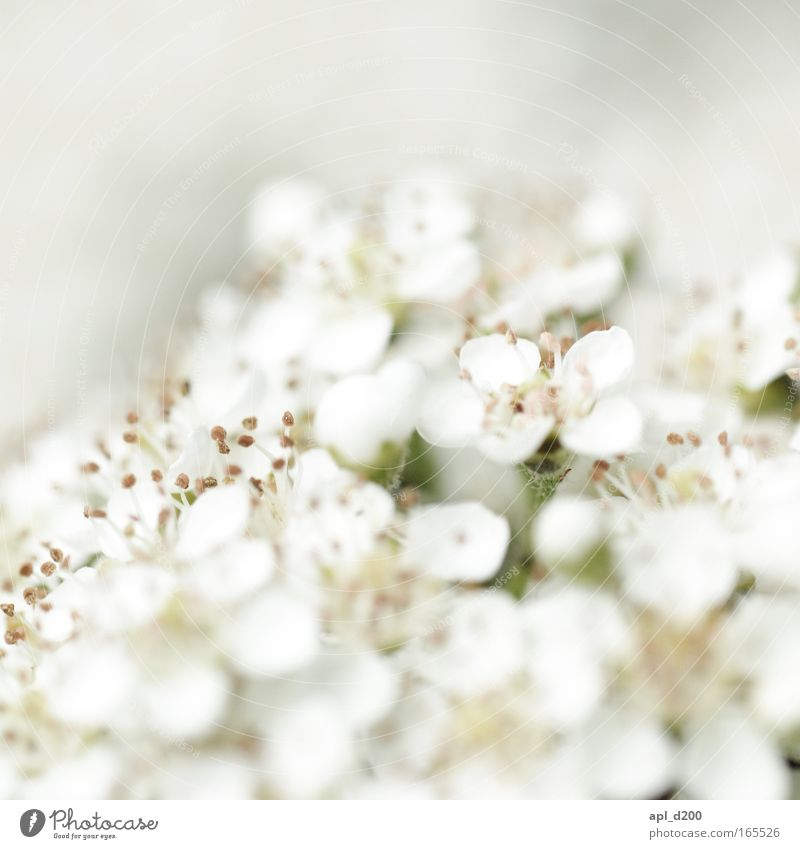 Nature White Flower Green Plant Blossom Spring Esthetic Clean Macro (Extreme close-up) Purity Cleanliness Wild plant