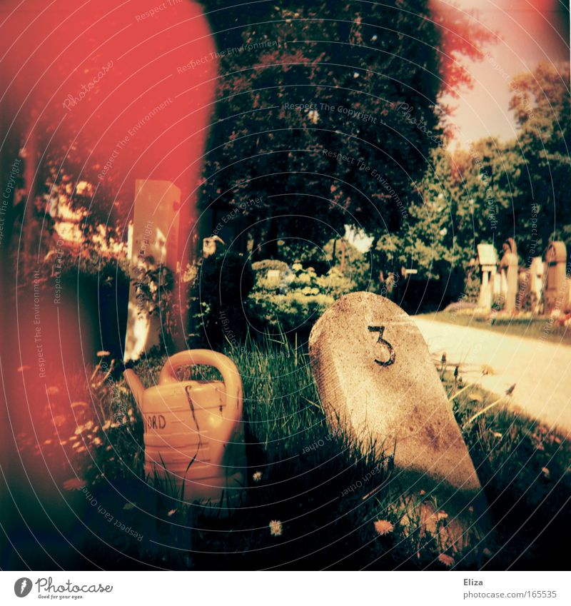 Flower Grass Garden Dream Stone Lanes & trails Park Bright 3 Digits and numbers Exceptional Blood Patch Lomography Cemetery Watering can