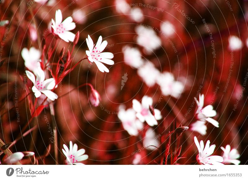 trifles Nature Plant Summer Autumn Beautiful weather Flower Grass Leaf Blossom chickweed Garden Park Meadow Field Blossoming Fragrance Faded To dry up Growth