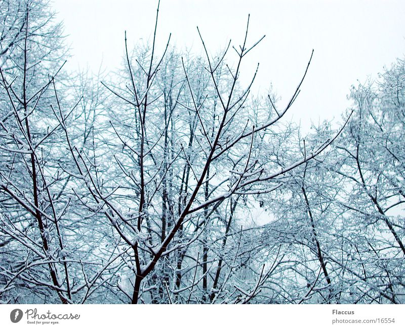 winter branches Winter Tree Branch Snow Treetop Structures and shapes fractal