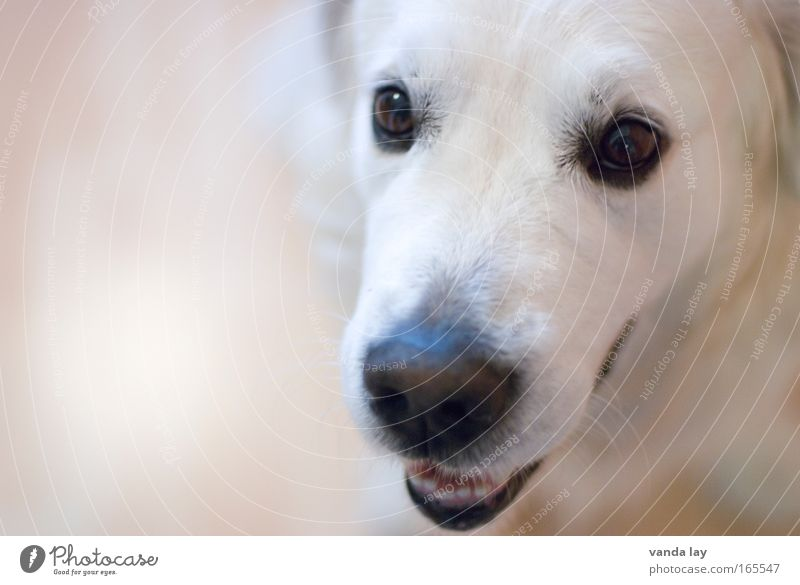 Dog White Joy Animal Movement Baby animal Contentment Nose Happiness Animal face Smiling Hunting Pet Cuddly Snout Loyalty