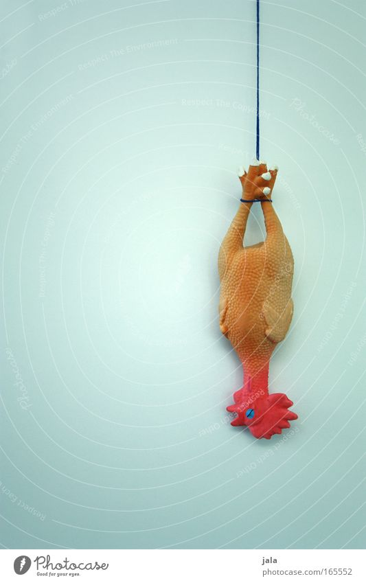 Relaxation Animal Funny Death Exceptional Crazy Nutrition Cooking & Baking Uniqueness Cool (slang) Plastic Toys Trashy Figure Barn fowl Farm animal