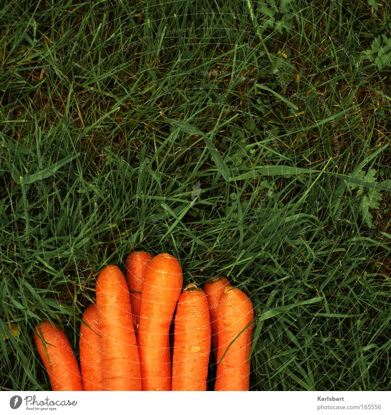 caressing. Food Carrot Nutrition Organic produce Beautiful Healthy Gardening Environment Grass Meadow Natural Diet Orange Colour photo Multicoloured