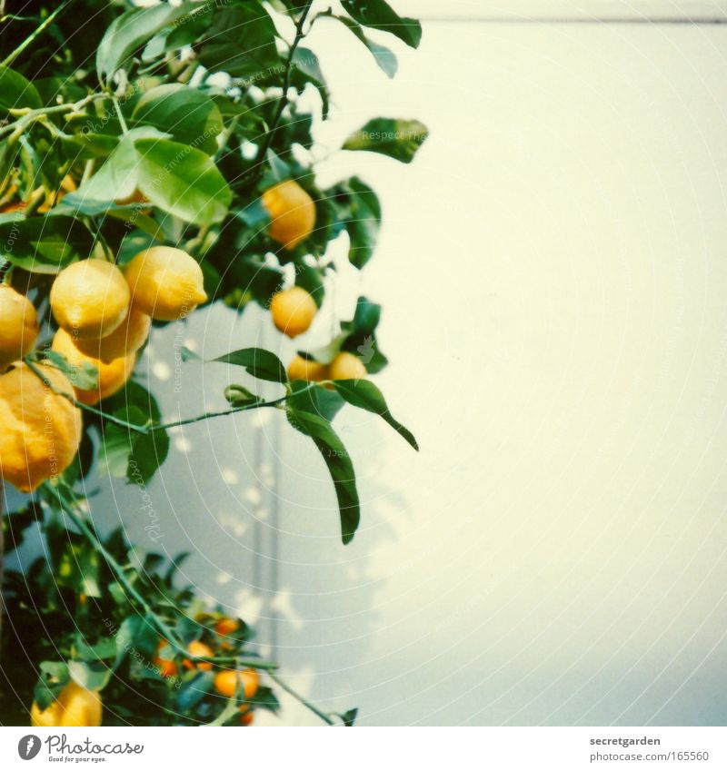 Nature White Green Plant Summer Yellow Nutrition Wall (building) Garden Fruit Fresh Esthetic Idyll Painting and drawing (object) Luxury Appetite