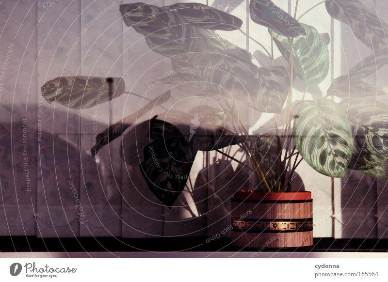 Plant Life Dream Sadness Design Time Esthetic Retro Future Change Kitsch Culture Education Transience Idyll Past